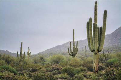 Winter Storm Photograph - A Foggy Sonoran Day  by Saija Lehtonen
