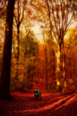Riding Hood Photograph - A Forest by Studio Yuki