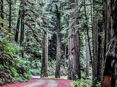 Photograph - A Forest Drive by Marilyn Diaz