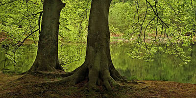 Photograph - A Forest Lake by Inge Riis McDonald