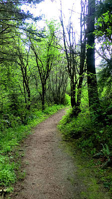 Photograph - A Forest Path - Greening Up by Marie Jamieson