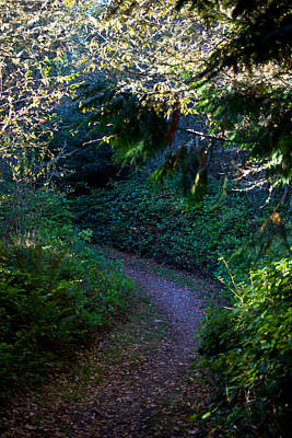 Photograph - A Forest Path In Evening's Light by Marie Jamieson