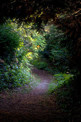 Photograph - A Forest Path Of An Evening by Marie Jamieson
