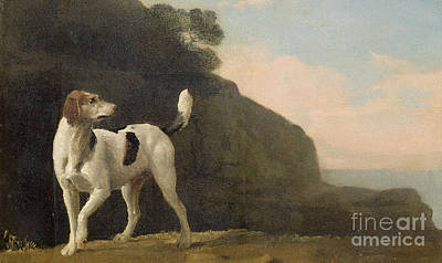 A Foxhound Art Print by George Stubbs