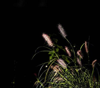 Photograph - A Foxtail by Hyuntae Kim