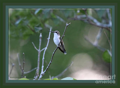 Photograph - A Framed Early Morning Visitor by Sandra Huston