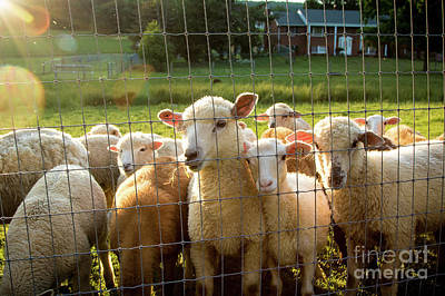 Photograph - A Friendly Flock by Eleanor Abramson