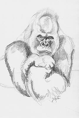 Animals Drawings - A Friendly Gorilla by John Keaton
