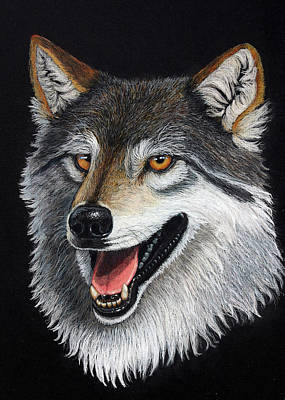 A Friendly Wolf Art Print by Lorraine Foster