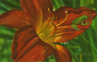 Painting - A Frog On A Lily by John Dyess