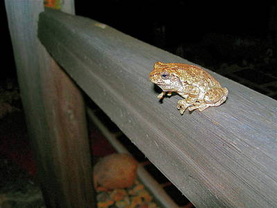 Split Rail Fence Photograph - A Frog Went A Courting by Randy Rosenberger