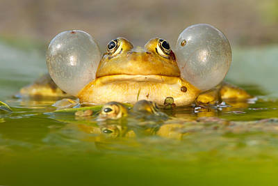 Frogs Photograph - A Frog's Life by Roeselien Raimond