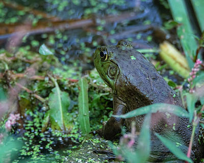 Photograph - A Frogs World by Ernie Echols