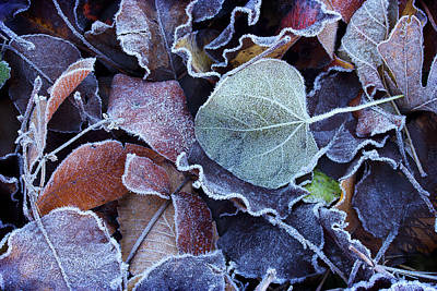 Photograph - A Frosty November Morning by Mike Eingle