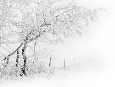 Photograph - A Frosty Winter Morning In Alberta by Dan Jurak