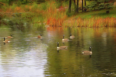 Photograph - A Gaggle Of Geese by Cedric Hampton