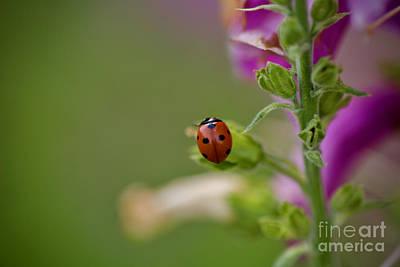 Photograph - A Garden Guest by Lara Morrison