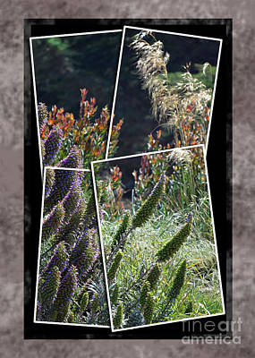 Photograph - A Garden With Echium by Jim Fitzpatrick