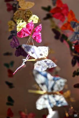 Photograph - A Garland Of Butterflies by John Meader