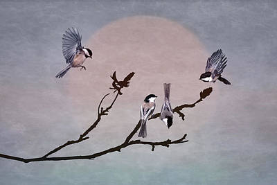 Photograph - A Gathering Of Chickadees by Leda Robertson