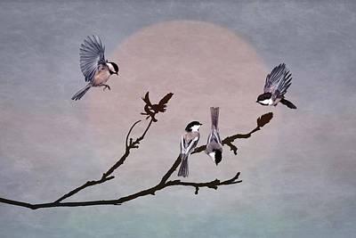Photograph - A Gathering Of Chickadees by Leda Robertson