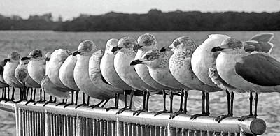 Photograph - A Gathering Of Gulls Bw  by HH Photography of Florida