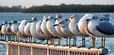 Photograph - A Gathering Of Gulls by HH Photography of Florida