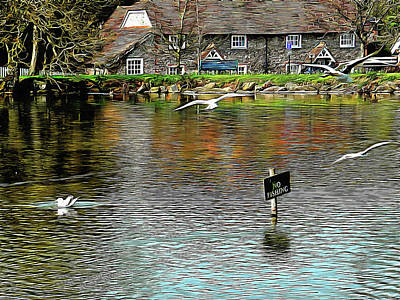 Photograph - A Gentle Landing by Dorothy Berry-Lound