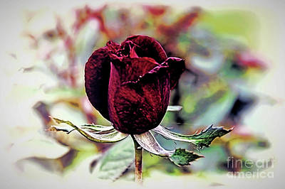 Photograph - A Gift by Diana Mary Sharpton