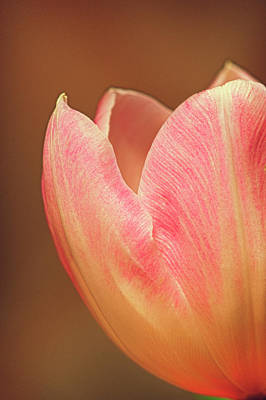 Photograph - A Gift Of Spring by Sandra Bronstein