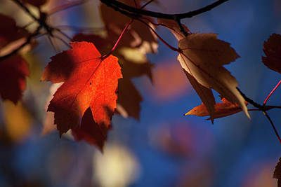 Photograph - A Glimpse Of Autumn by Karol Livote
