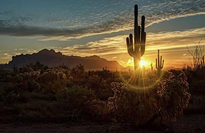 Photograph - A Glorious Sonoran Morning  by Saija Lehtonen