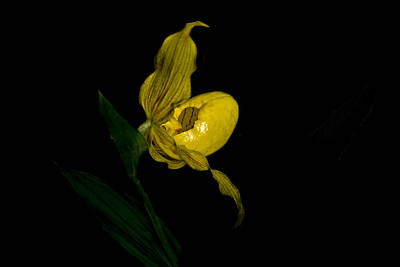Photograph - A Glow In The Dark by Shelly Gunderson