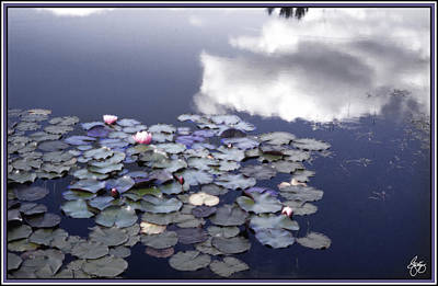 Photograph - A Glow Of Lilies by Wayne King