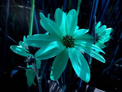 Plants Photograph - A Glow Of Moonlight On Flowers by Trinket's Legacy