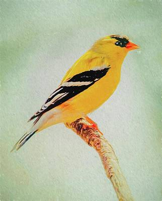 Photograph - A Gold Finch Perching by Rusty R Smith