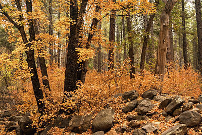 Photograph - A Golden Autumn Forest  by Saija Lehtonen