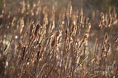 Photograph - A Golden Morning by Maria Urso