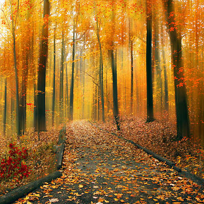 Photograph - A Golden Passage by Jessica Jenney