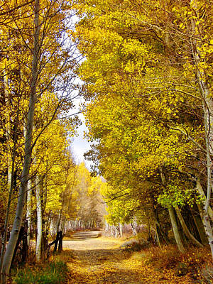Photograph - A Golden Path by Marilyn Diaz