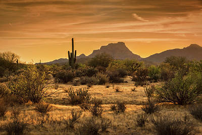 Photograph - A Golden Sunset On The Sonoran  by Saija Lehtonen