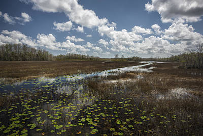 Photograph - A Good Day At The Preserve by Jon Glaser