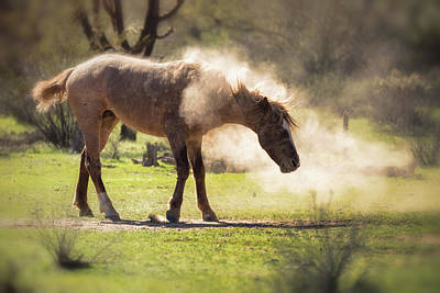 Photograph - A Good Dust Bath  by Saija Lehtonen