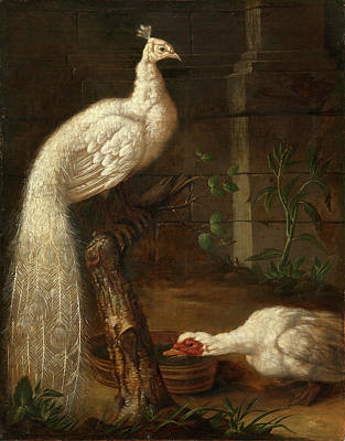 Geese Painting - A Goose And A White Peacock by Ivan Grooth