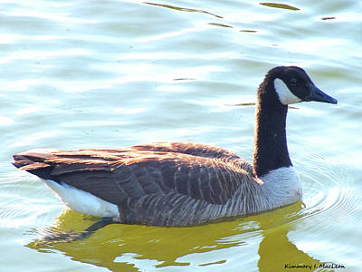Photograph - A Goose In The Chesapeake Bay by Kimmary I MacLean
