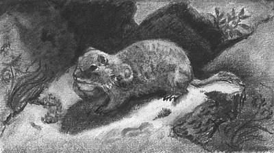 Drawing - A Gopher Named Trouble by Dawn Senior-Trask