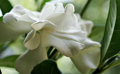 Gardenia Photograph - A Graceful Lady by Kathy Bucari