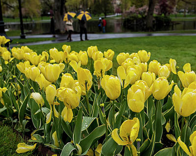 Photograph - A Gray Rainy Yellow Day In The Public Garden by Toby McGuire