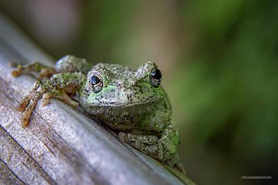 Photograph - A Gray Tree Frog by LeeAnn McLaneGoetz McLaneGoetzStudioLLCcom