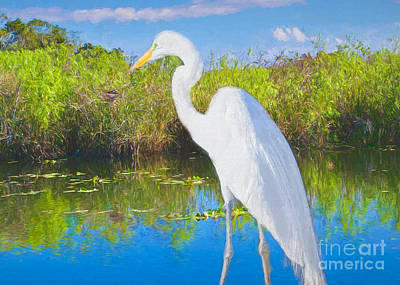 Painting - A Great Egret In Landscape by Judy Kay